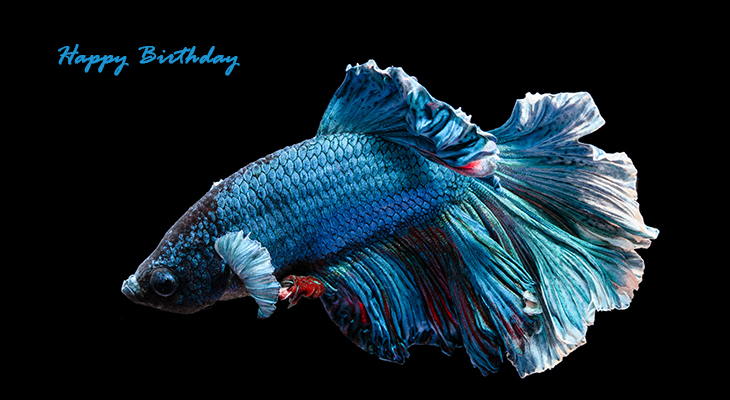 happy birthday wishes, birthday cards, birthday card pictures, famous birthdays, tropical fish, blue bettafish, japanese fighting fish
