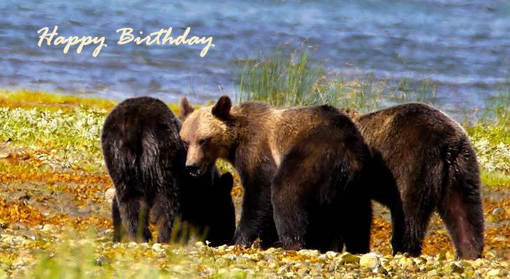 happy birthday wishes, birthday cards, birthday card pictures, famous birthdays, bears, bear cubs, baby animals, wild animals