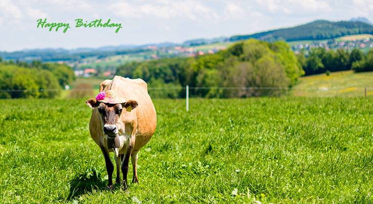 happy birthday wishes, birthday cards, birthday card pictures, famous birthdays, cow, funny animals, nature scenery