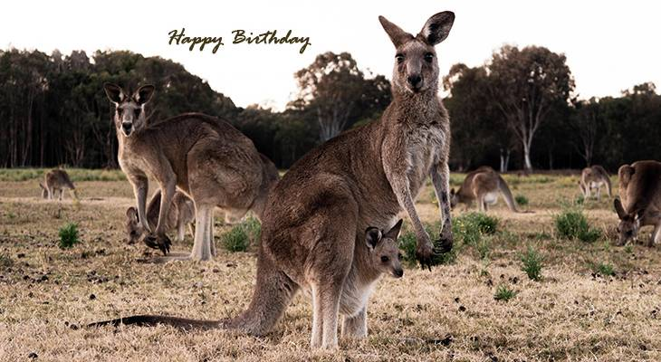 happy birthday wishes, birthday cards, birthday card pictures, famous birthdays, kangaroos, baby animals, wild animals, australian animals