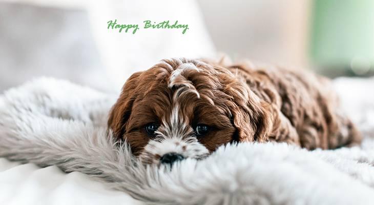 happy birthday wishes, birthday cards, birthday card pictures, famous birthdays, dog, baby animals, puppy