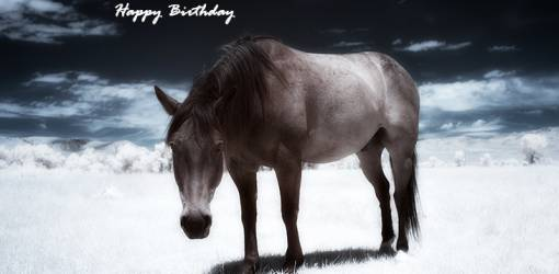 happy birthday wishes, birthday cards, birthday card pictures, famous birthdays, horse, animals, dubois wyoming, nature scenery