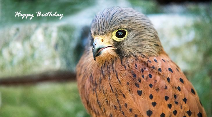 happy birthday wishes, birthday cards, birthday card pictures, famous birthdays, wild bird, falcon, hawk, birds of prey