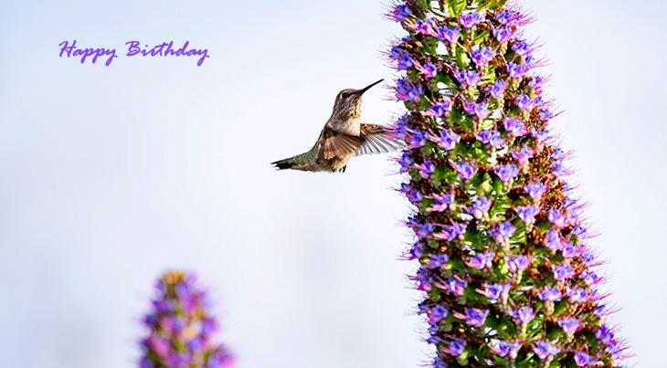 happy birthday wishes, birthday cards, birthday card pictures, famous birthdays, hummingbird, wild birds, pink flowers