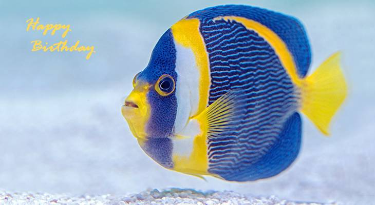 happy birthday wishes, birthday cards, birthday card pictures, famous birthdays, angel fish, cairns aquarium, tropical fish, australia