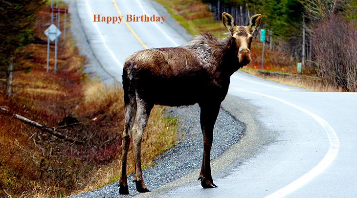 happy birthday wishes, birthday cards, birthday card pictures, famous birthdays, moose, wild animals, baby animals, utumn, fall