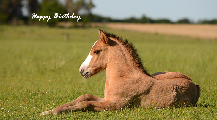 happy birthday wishes, birthday cards, birthday card pictures, famous birthdays, foal, baby animals, horse, colt, filly, nature scenery
