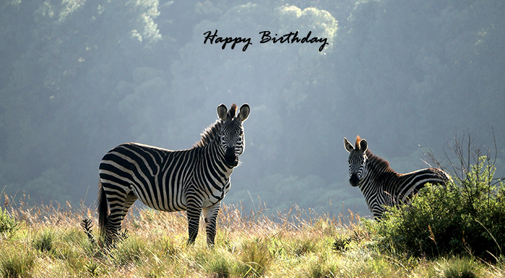 happy birthday wishes, birthday cards, birthday card pictures, famous birthdays, zebras, wild animals, african animals