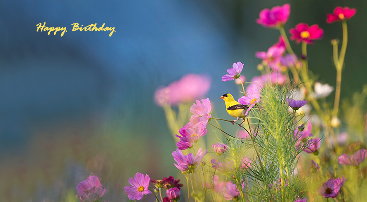 happy birthday wishes, birthday cards, birthday card pictures, famous birthdays, yellow bird, pink flowers, wild flowers,