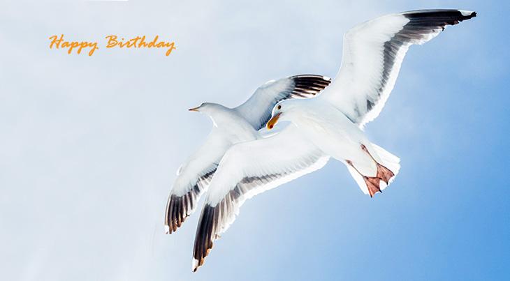 happy birthday wishes, birthday cards, birthday card pictures, famous birthdays, white birds, seagulls, wild birds