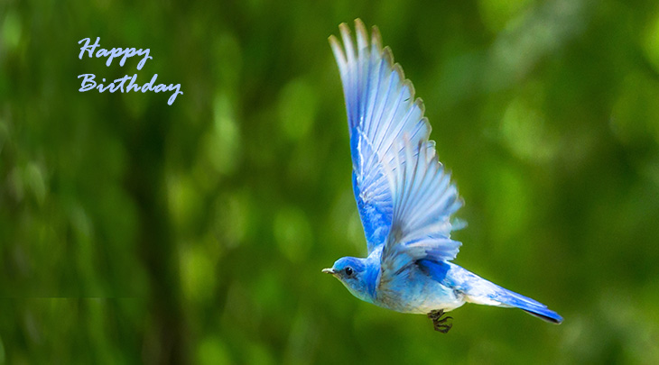 happy birthday wishes, birthday cards, birthday card pictures, famous birthdays, blue bird, wild birds