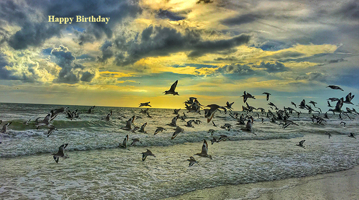 happy birthday wishes, birthday cards, birthday card pictures, famous birthdays, sea birds, ocean, beach, nature scenery, wild birds
