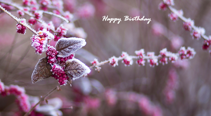 happy birthday wishes, birthday cards, birthday card pictures, famous birthdays, frozen berries, leaves, frost, winter flowers