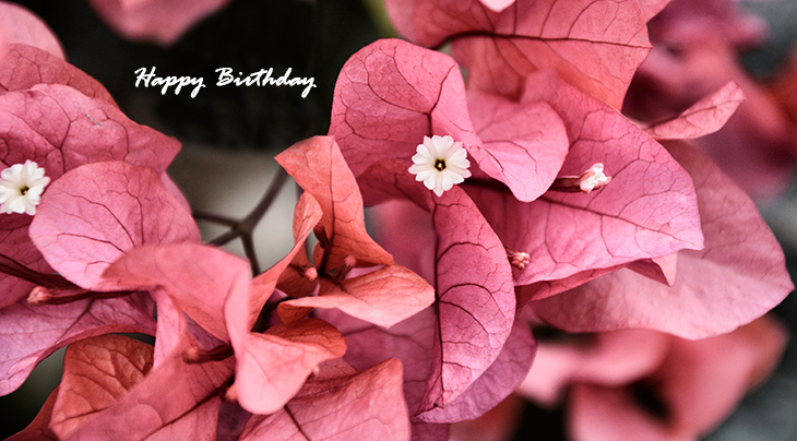 happy birthday wishes, birthday cards, birthday card pictures, famous birthdays, pink flowers, leaves,