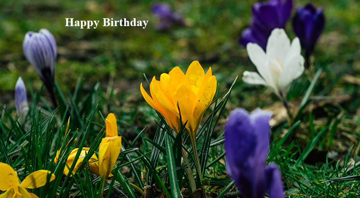 happy birthday wishes, birthday cards, birthday card pictures, famous birthdays, yellow flowers, purple crocus, spring flowers