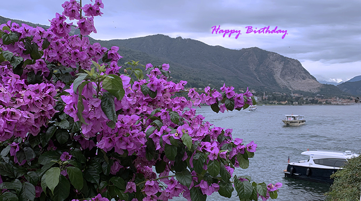 happy birthday wishes, birthday cards, birthday card pictures, famous birthdays, pink flowers, bougainvillea, isola bella, lake maggiore, northern italy
