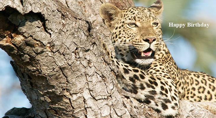 happy birthday wishes, birthday cards, birthday card pictures, famous birthdays, leopard, wild animals, african big cats