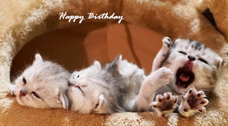 happy birthday wishes, birthday cards, birthday card pictures, famous birthdays, kittens, baby animals, cats