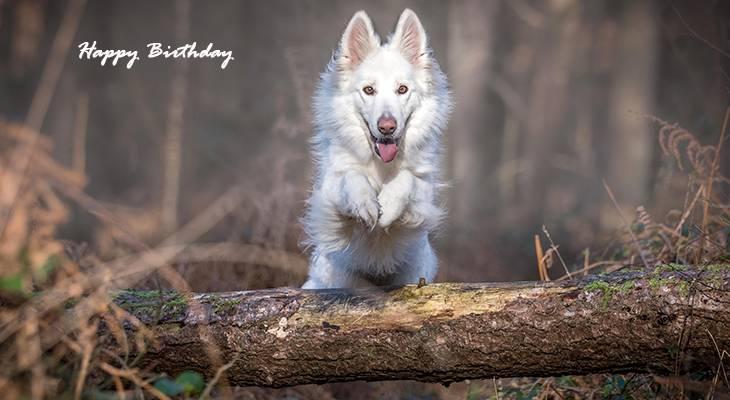 happy birthday wishes, birthday cards, birthday card pictures, famous birthdays, white dog, animals, shepherd