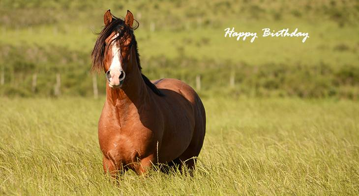happy birthday wishes, birthday cards, birthday card pictures, famous birthdays, horse, animals, nature scenery