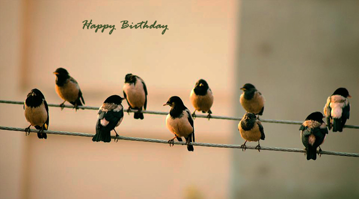 happy birthday wishes, birthday cards, birthday card pictures, famous birthdays, wild birds, birds on a wire, yellow birds, orioles