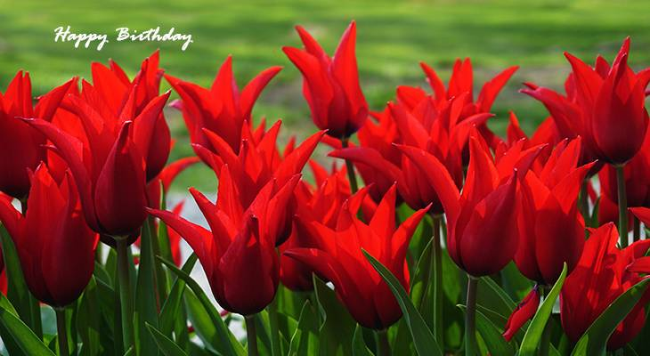 happy birthday wishes, birthday cards, birthday card pictures, famous birthdays, red tulips, field of flowers, red flowers, spring bulbs