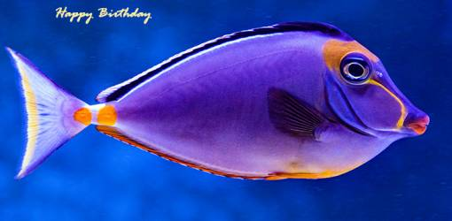 happy birthday wishes, birthday cards, birthday card pictures, famous birthdays, purple fish, tropical fish, aquarium, blue tang, surgeon fish
