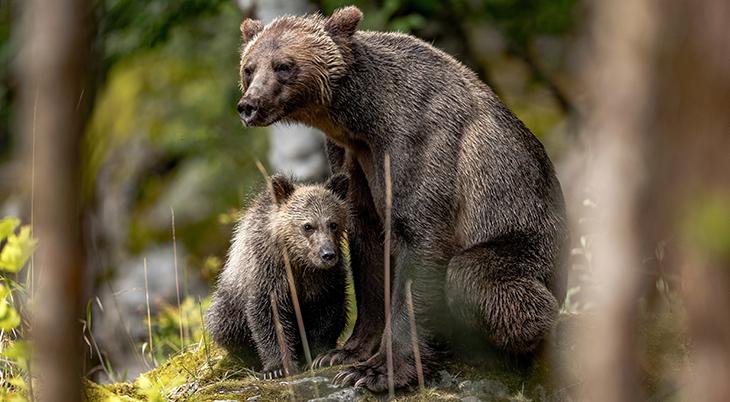 mother bear, baby bear cub, happy mothers day, animal moms, best animal mothers