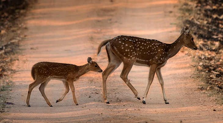mother deer, baby deer, fawn, happy mothers day, wild animal mothers