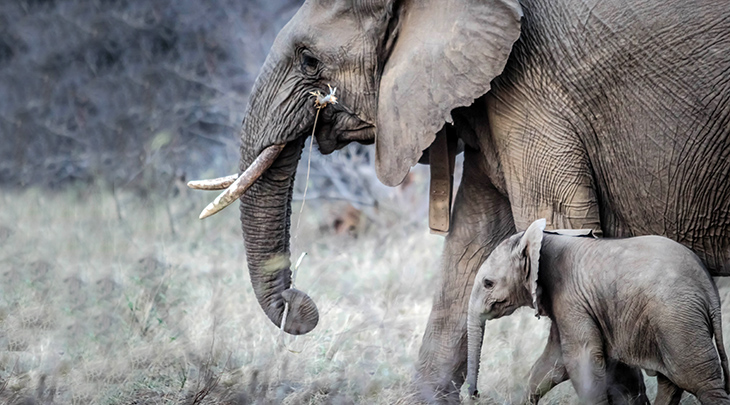 mother elephant, baby elephant, wild animal mothers, happy mothers day, animal babies