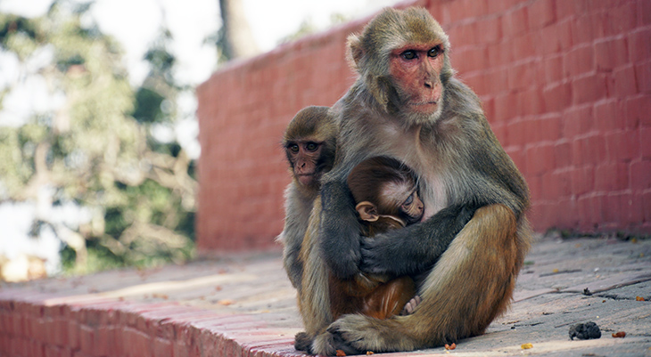 mother monkey, monkey babies, happy mothers day, wild animal mothers, animal babies,