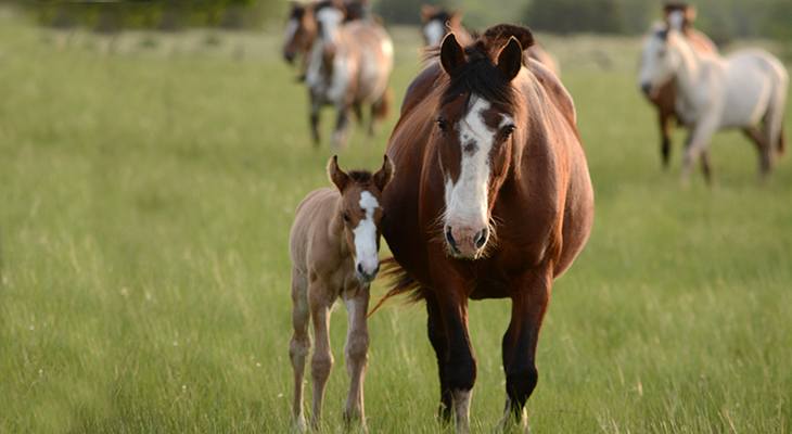 mother horse, mare, foal, baby horse, happy mothers day, mother animals, animal babies