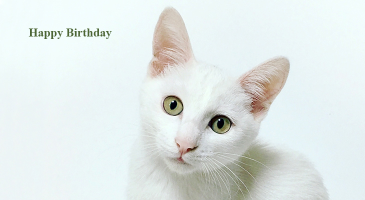 happy birthday wishes, birthday cards, birthday card pictures, famous birthdays, white cat, kitten, baby animals