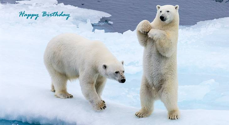 happy birthday wishes, birthday cards, birthday card pictures, famous birthdays, polar bear cubs, wild animals, white bears, winter