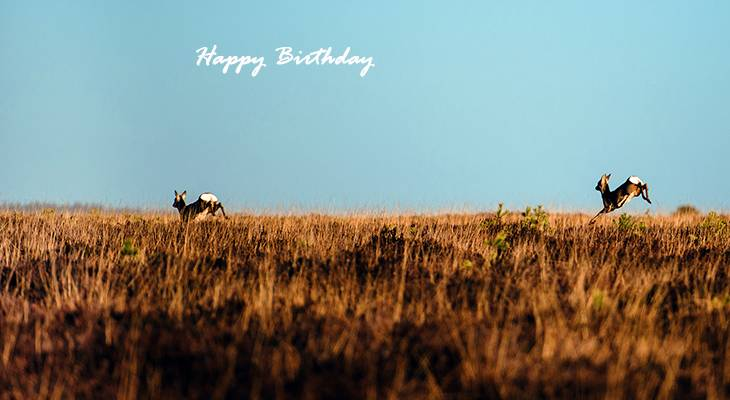 happy birthday wishes, birthday cards, birthday card pictures, famous birthdays, deer, wild animals, nature scenery