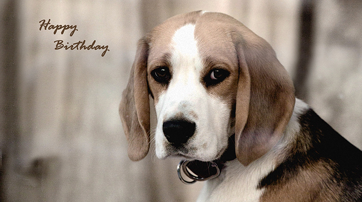 happy birthday wishes, birthday cards, birthday card pictures, famous birthdays, dog, beagle puppy, baby animals