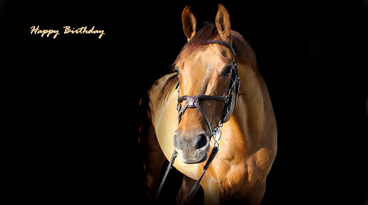 happy birthday wishes, birthday cards, birthday card pictures, famous birthdays, horse, animals