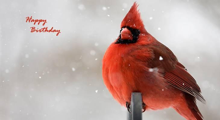 happy birthday wishes, birthday cards, birthday card pictures, famous birthdays, red bird, cardinal, winter, wild birds