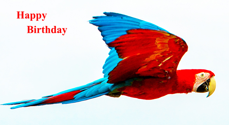 happy birthday wishes, birthday cards, birthday card pictures, famous birthdays, colorful bird, red parrot, scarlet macaw