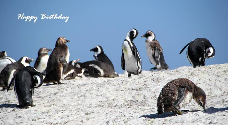 happy birthday wishes, birthday cards, birthday card pictures, famous birthdays, penguins, wild birds, south africa, cape town, seaforth beach