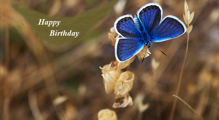 happy birthday wishes, birthday cards, birthday card pictures, famous birthdays, blue butterfly, white flowers, nature scenery