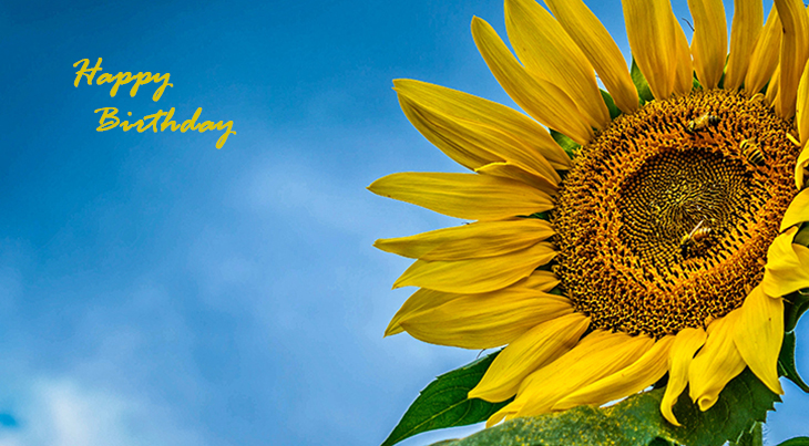 happy birthday wishes, birthday cards, birthday card pictures, famous birthdays, yellow flowers, sunflower, blue sky, bees