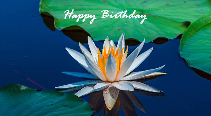 happy birthday wishes, birthday cards, birthday card pictures, famous birthdays, water lily, purple flowers, pond flowers