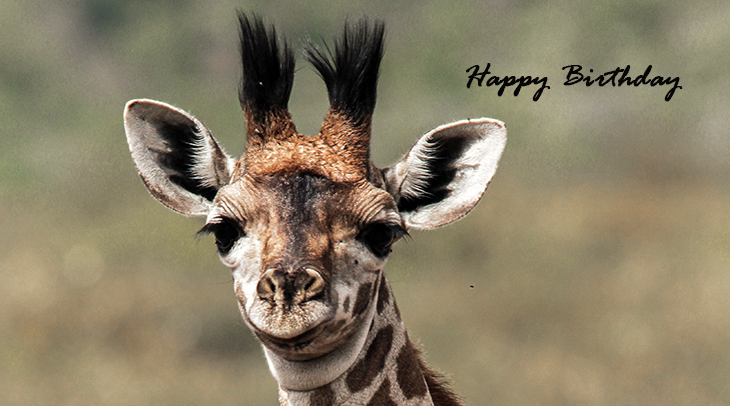 happy birthday wishes, birthday cards, birthday card pictures, famous birthdays, giraffe, wild animals, african animals