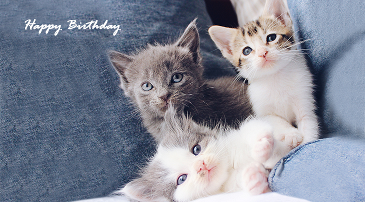 happy birthday wishes, birthday cards, birthday card pictures, famous birthdays, kittens, cute baby animals, cats