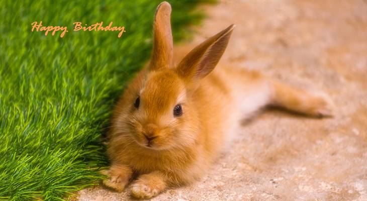 happy birthday wishes, birthday cards, birthday card pictures, famous birthdays, brown rabbit, bunny, animal