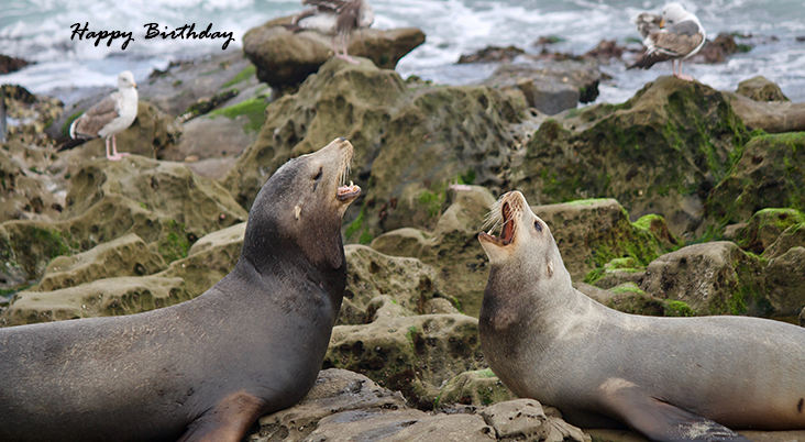 happy birthday wishes, birthday cards, birthday card pictures, famous birthdays, wild animals, seals,
