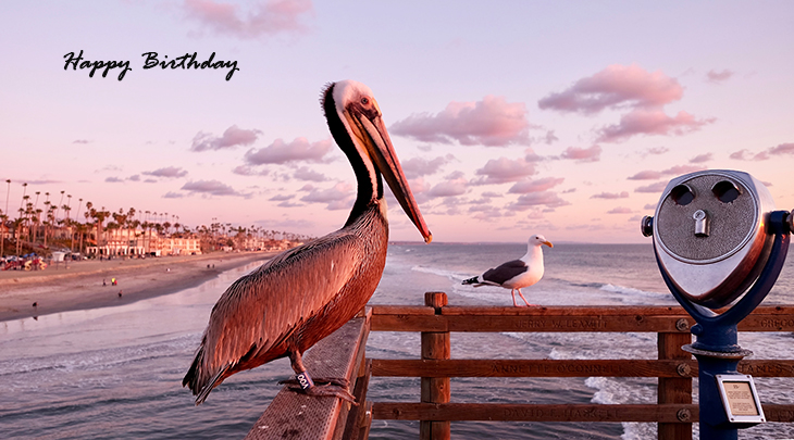 happy birthday wishes, birthday cards, birthday card pictures, famous birthdays, pelican, seagull, wild birds, oceanside, california, beach