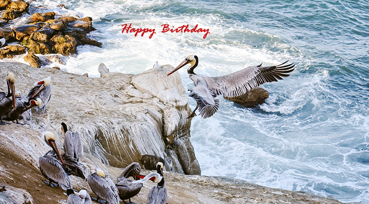 happy birthday wishes, birthday cards, birthday card pictures, famous birthdays, sea birds, wild birds, pelican, nature scenery