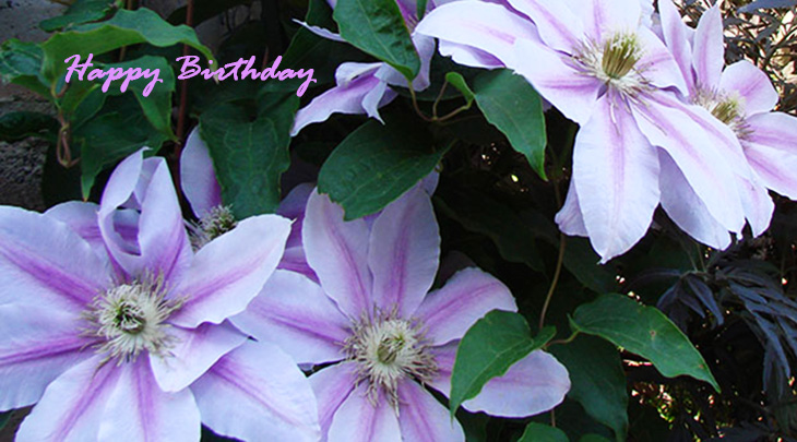 happy birthday wishes, birthday cards, birthday card pictures, famous birthdays, purple flowers, clematis